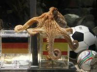 Paul the Octopus Prediction: Germany vs. Spain